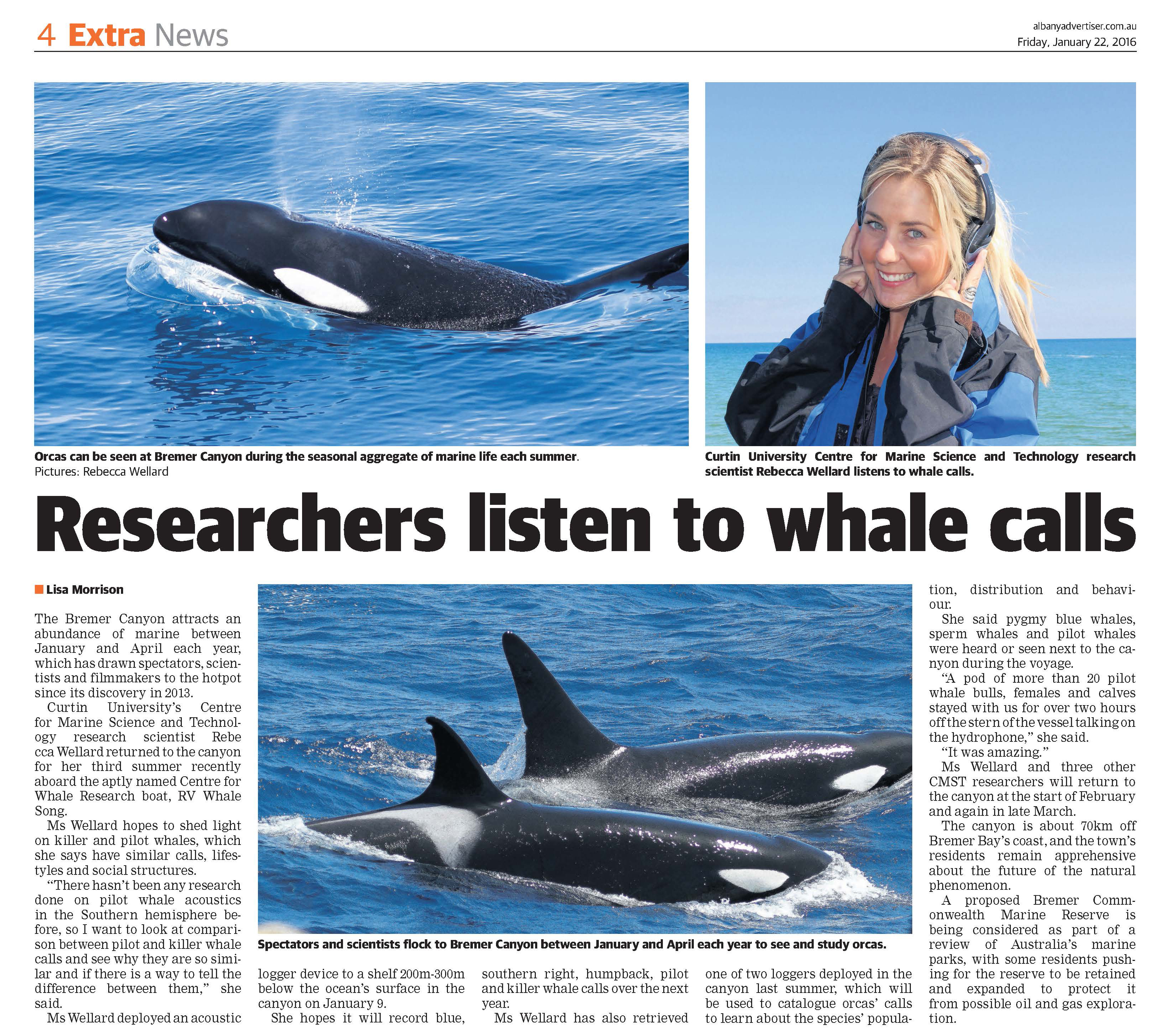 researchers listen to whale calls albany advertiser 22jan 2016