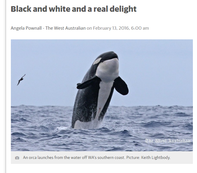 Black and white real delight_West Australian
