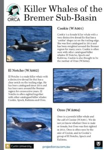 killer-whales-from-bremer-sub-basin_cmst-page-001
