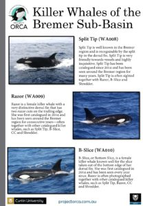 killer-whales-from-bremer-sub-basin_cmst-page-002