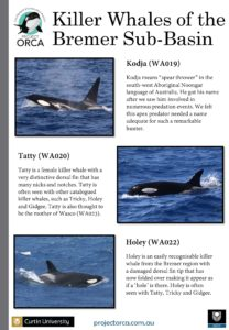 killer-whales-from-bremer-sub-basin_cmst-page-003