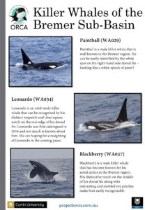 killer-whales-from-bremer-sub-basin_cmst-page-004