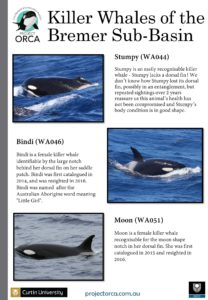 killer-whales-from-bremer-sub-basin_cmst-page-005