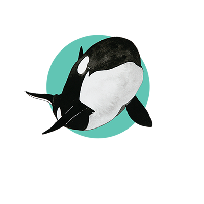 project orca orca research and conservation australia